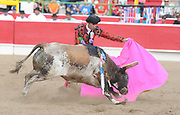 BEA AHBECK/NEWS-SENTINEL<br /> A brega fights the bull during the bloodless bullfight during the Our Lady of Fatima Portuguese Festival in Thornton Saturday, Oct. 15, 2016.
