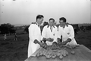 02/07/1963<br /> 07/02/1963<br /> 02 July 1963<br /> Macra na Feirme/Irish Shell and BP Ltd. Farm Tasks Competitions Connacht Finals at Strokestown, Co. Roscommon. The competition was won by a team from Strokestown Branch representing Roscommon. Photo shows the Strokestown team competing in the Potato selection section (l-r); Sean Brennan; Vincent Cox and Peter Dolan.
