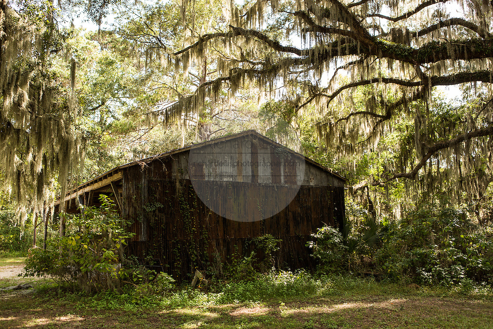 An old shed among live oak trees with spanish moss at Honey Horn Plantation on Hilton Head Island, SC