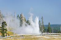 Grand Geyser erupting, Yellowstone National Park