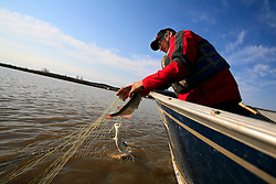 CANADA ALBERTA FORT CHIPEWYAN 12MAY07 - Robert Grandejambe (46) of the Mikisew First Nation catches fish by net aboard his boat in the Quatrefouche River, a tributary to Lake Athabasca...jre/Photo by Jiri Rezac / WWF-UK..© Jiri Rezac 2007..Contact: +44 (0) 7050 110 417.Mobile: +44 (0) 7801 337 683.Office: +44 (0) 20 8968 9635..Email: jiri@jirirezac.com.Web: www.jirirezac.com..© All images Jiri Rezac 2007 - All rights reserved.