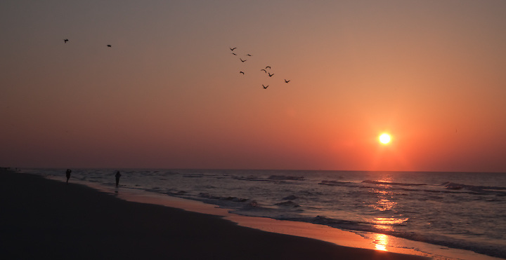 Folly Beach, Charleston South Carolina, Sunrise, Birds
