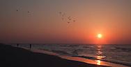 Folly Beach, Charleston South Carolina, Sunrise, Birds