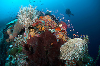 Reefscape with Diver....Shot in Indonesia