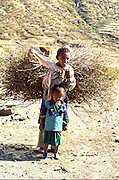 Africa, Ethiopia, Konso child carrying a large bundle of twigs