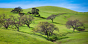 Panorama photo of oaks dot the green hillsides of the central California coast in spring.