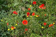 wild Flowers in a meadow in Hyeres