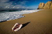 Divorce beach, pacific side, baja california south, mexico. Sea shell. los cabos mexico photography