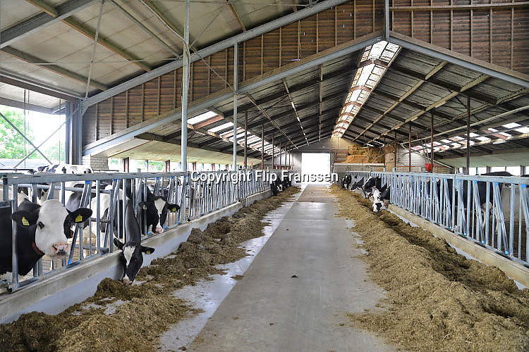 Nederland, Groesbeek, 23-5-2017Koeien staan in de stal bij een melkveebedrijf. Volgende week is er een open dag georganiseerd door melkproducent Friesland-Campina.Foto: Flip Franssen