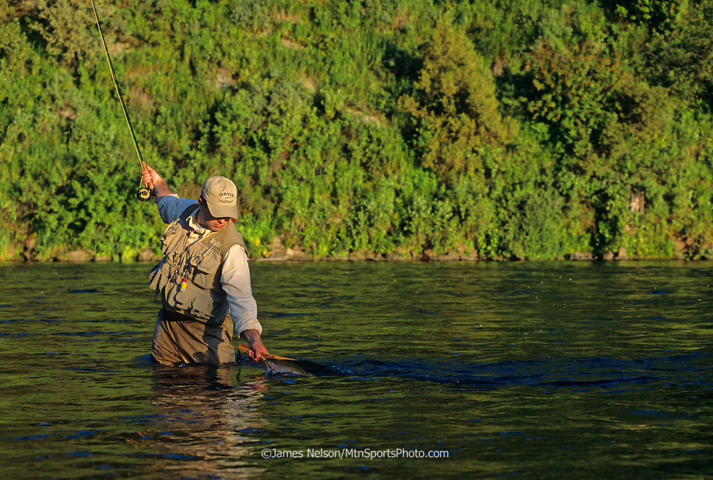 0898-C. A fly fisherman brings a rainbow trout to the net on a stretch of the lower Henry's Fork between the towns of Ashton and St. Anthony, Idaho.