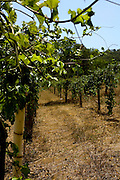 Sao Tiago_MG, Brasil...Imagens da fazenda da Saudade, no qual o produtor utiliza tecnicas artesanais para a producao sem agrotoxicos...The Saudade  farm, the producer uses handmade techniques to the production without pesticides...Foto: BRUNO MAGALHAES / NITRO..