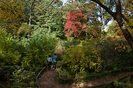 Wandering into the Native Flora Garden of the Brooklyn Botanic Garden, Brooklyn, New York