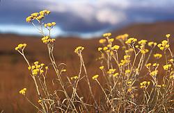 Minas Gerais, Brasil. 07/2002..Flor encontrada no Parque Nacional da Serra da Canastra./ Flower found in the National Park of Serra da Canastra..Foto ©Marcos Issa/Argosfoto