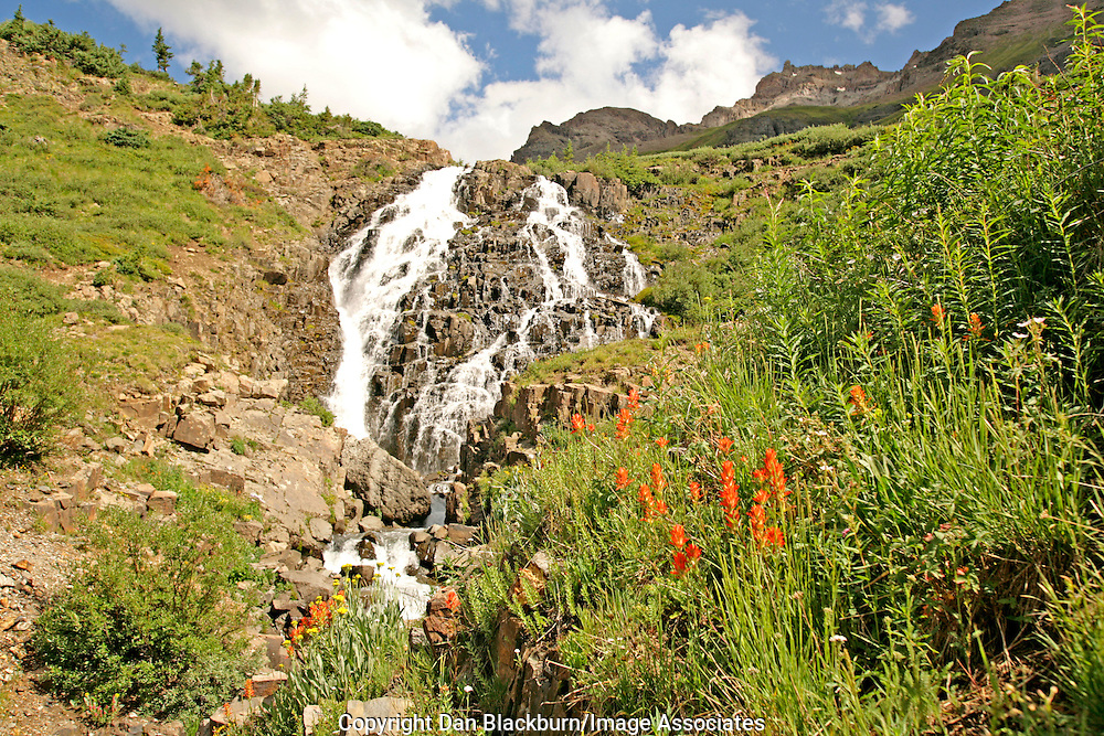 Twin Falls & Wildflowers Yankee Boy Basin San Juan Mountains Colorado