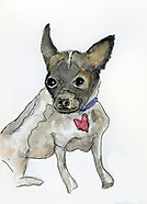Rescue Dog and Cat Drawings