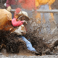 Mud flies as Dustin Stephens of Corvallis grasps a steer in the first go of the steer wrestling competition.