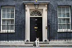 Larry the cat on the doorstep of 10 Downing Street, London.