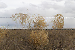 tumbleweed against a wire fence in New Mexico