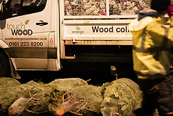 © Licensed to London News Pictures. 29/11/2018. Manchester, UK. An urban fox is seen amongst Christmas trees being sold at New Smithfield Market in Manchester overnight , as fish , vegetable and meat traders work to dispatch orders for businesses across England . Photo credit: Joel Goodman/LNP