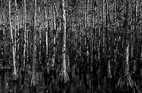 Cypress Swamp along Loop Road in Big Cypress National Preserve. Winter Nature in Florida. Image taken with a Leica T camera and 18-56 mm lens.