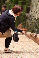 A female wild deer waits patiently on the ground to be fed by a visiting Japanese woman at the entrance to Kasuga Taisha Shrine, Nara, Japan.