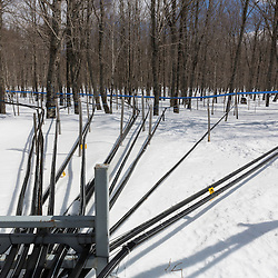 Plastic tubing carries sap from the sugarbush to the Rodrique family sugarhouse in Big Six Township, Maine.