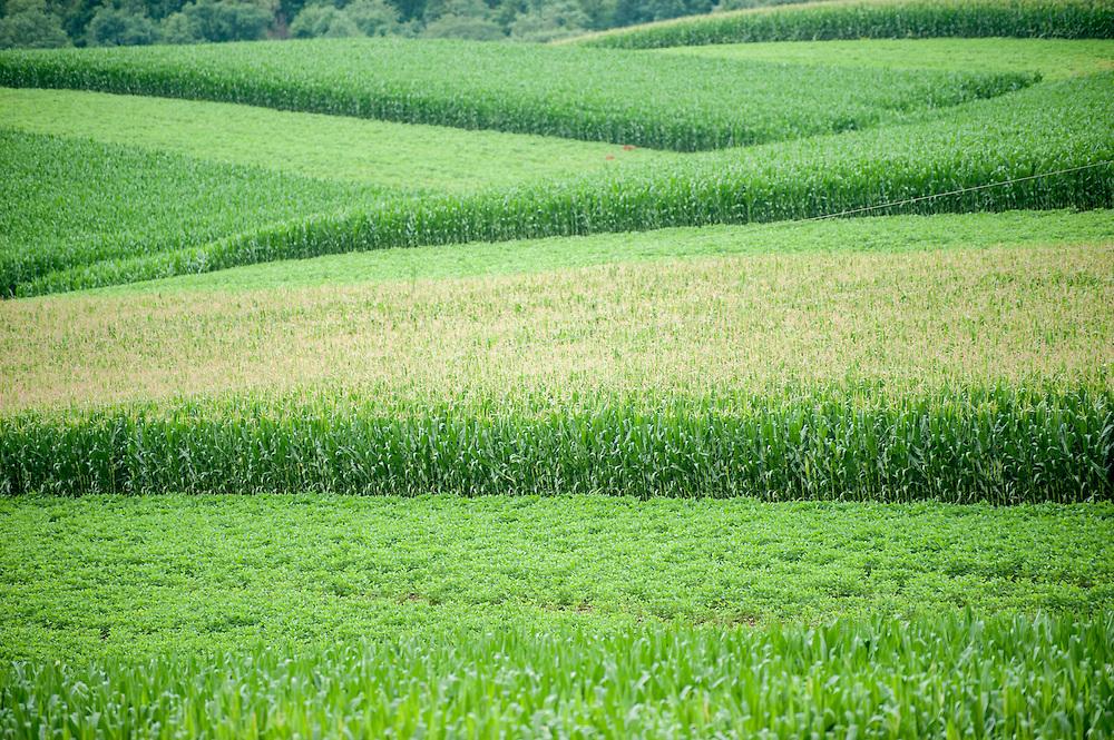 Corn field <br /> Brouge PA