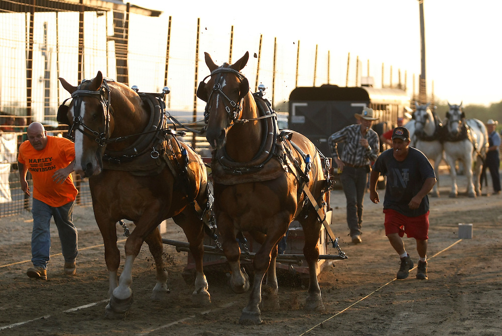"Bud Lowe, left, and Charlie Beeman, right, run alongside Duke and Rex as they pull a sledge weighing several thousand pounds during a horse pulling competition at the Mercer County Fair in Aledo, IL on Thursday, July 14.  In past competitions, Duke and Rex have pulled a sledge weighing over 12,000 pounds more than 20 feet.  ""I didn't drive 700 miles for nothing,"" says Charlie."