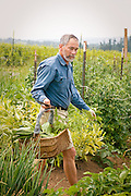 Tim Lanfri surveys the garden to harvest vegetables.