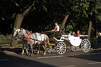 two white and gray horses with red harness and tassles pull 3 middle aged female tourists through krakow old town in a white carriage. sunlight falls across the carriage and the parkland called Planty can be seen behind.