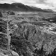 Cypress Skeleton - Point Lobos, CA -  HDR - Infrared Black & White