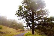 Polipoli, Haleakala, Maui, Hawaii