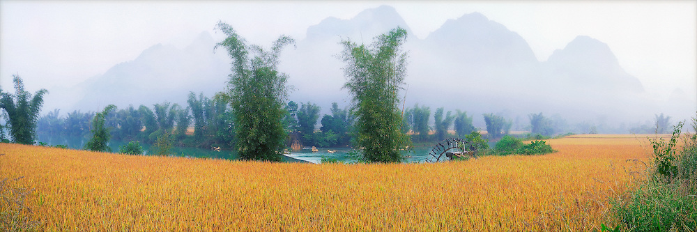 landscape of north vietnam in harvesting season