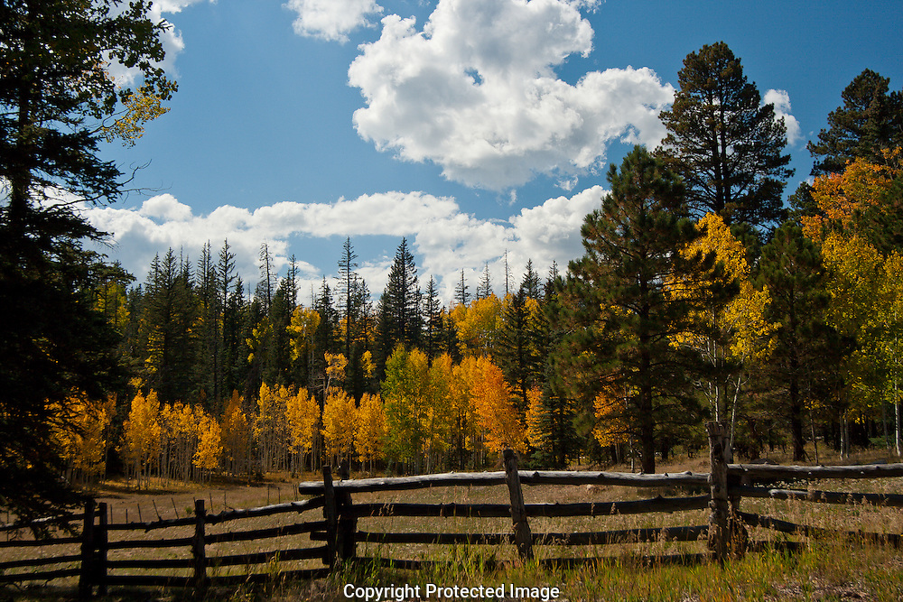 Bright yellow,orange,browns and green colors of the fall foliage at the North Rim.