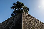 Tokyo Imperial East Garden - Tokyo, Japan, 2018- August 26 th
