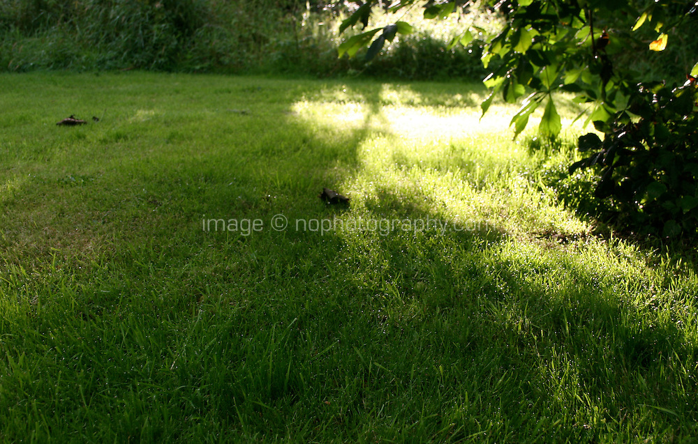 Early morning dew on grass shaded by horse chestnut tree in Ireland