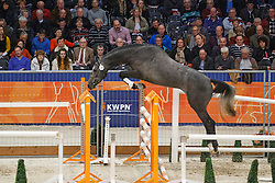 131 - Grodino<br /> KWPN Stallion Selection - 's Hertogenbosch 2014<br /> © Dirk Caremans