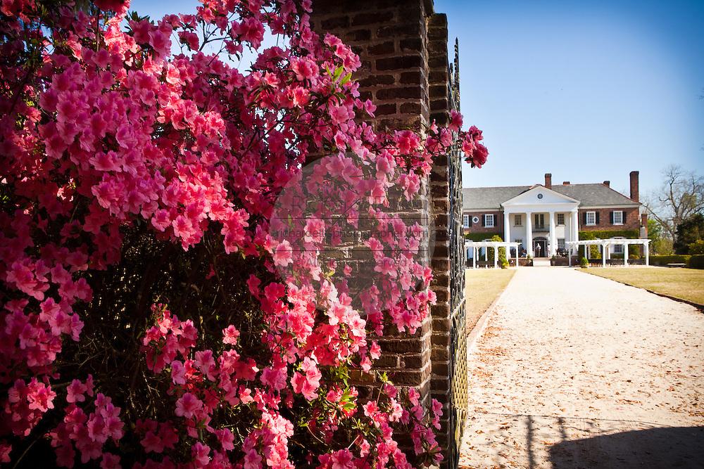 Boone Hall Plantation in Charleston, SC.