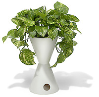 potted plant in a white vase