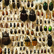Display of Queensland insects on display in the Queensland Museum
