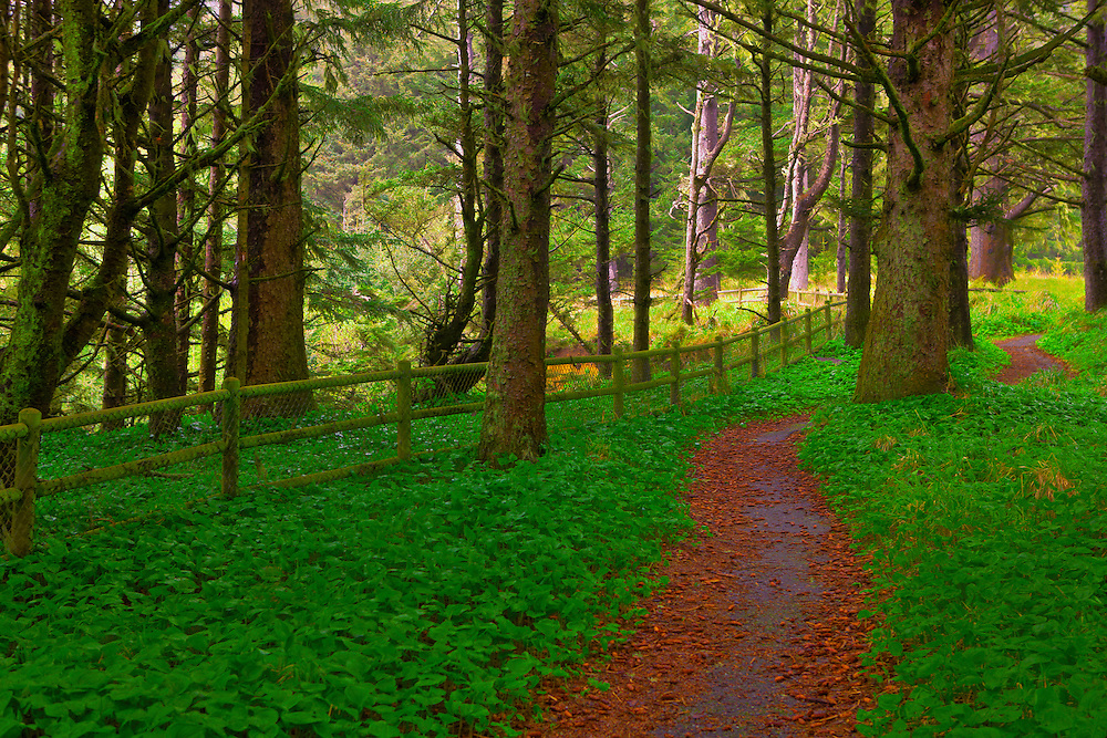 Arch Rock Point Forest Path - Oregon Coast - HDR