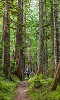 A woman hiking on a trail through old growth trees, Mount Rainier National Park, Washington, USA.