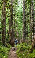 A woman hiking on a trail through old growth trees, Mount Rainier National Park, Washington, USA.