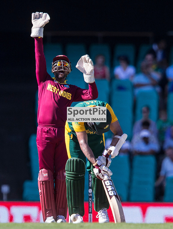 ICC Cricket World Cup 2015 Tournament Match, South Africa v West Indies, Sydney Cricket Ground; 27th February 2015<br /> West Indies Denesh Ramdin appeals for LBW as South Africa&rsquo;s Hashim Amla bows his head