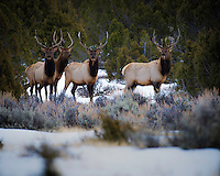 Maxwell Dad elk hunt colorado with Tyler and Rance Rust. December  2016. Patrick Flood Photography llc