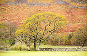 Trees and bracken on hillside, Howtown, Lake District national park, Cumbria, England, UK