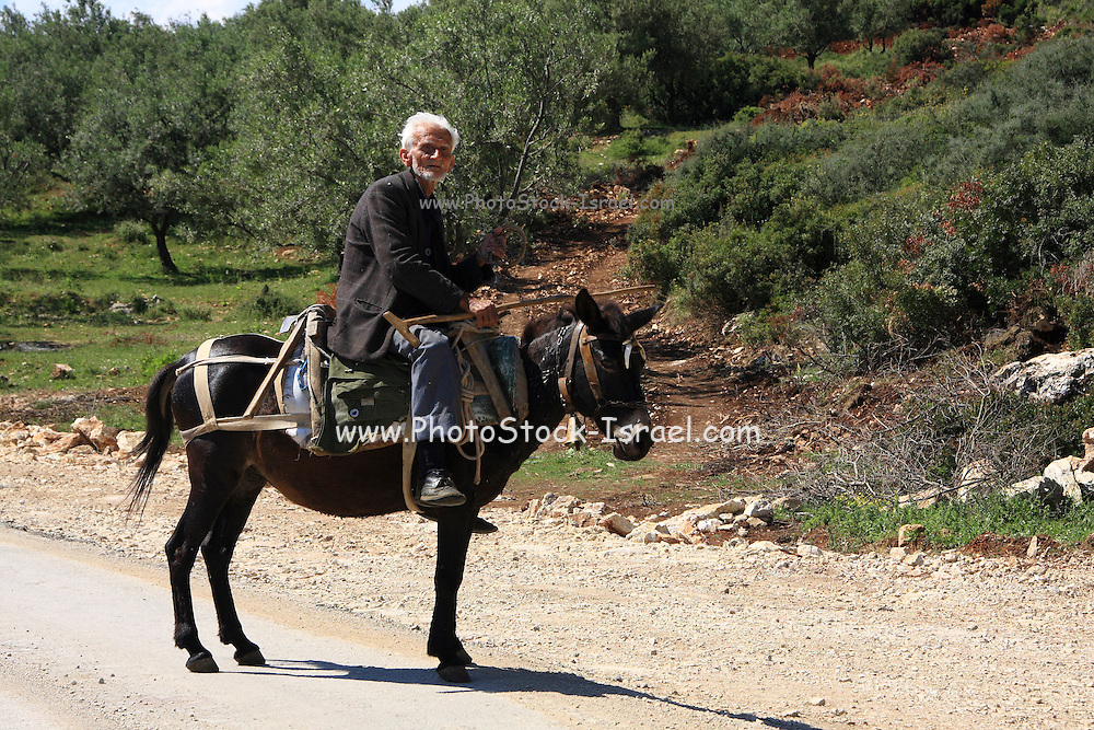 Albania Butrint mature farmer on his donkey on his way to the olive groves