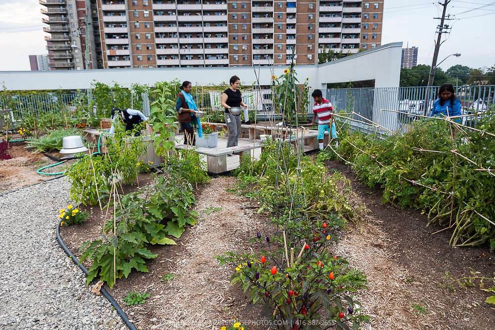 Rooftop Vegetable Garden Greenfuse Photos Garden Farm