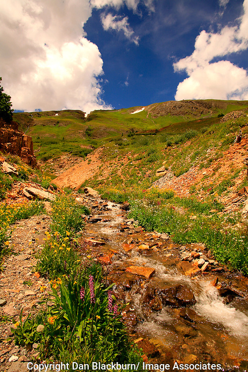 Wildflowers Blooming Beside Flowing Stream in Porphyry Basin San Juan Mountains Colorado