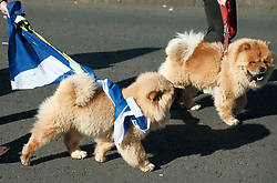 All Under One Banner Independence March, Edinburgh, Saturday 6th October 2018<br /> <br /> Pictured: Dogs march for Independence<br /> <br /> (c) Aimee Todd | Edinburgh Elite media